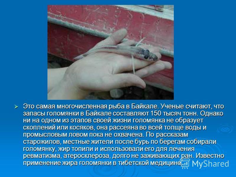 Это самая многочисленная рыба в Байкале. Ученые считают, что запасы голомянки в Байкале составляют 150 тысяч тонн. Однако ни на одном из этапов своей жизни голомянка не образует скоплений или косяков, она рассеяна во всей толще воды и промысловым лов