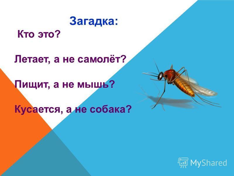 Загадка: Кто это? Летает, а не самолёт? Пищит, а не мышь? Кусается, а не собака?
