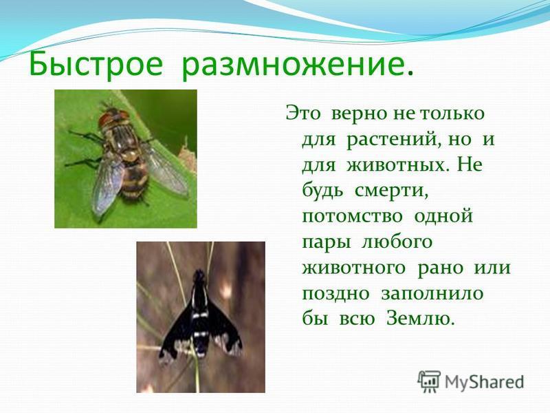 Быстрое размножение. Это верно не только для растений, но и для животных. Не будь смерти, потомство одной пары любого животного рано или поздно заполнило бы всю Землю.
