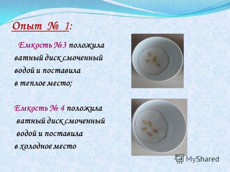 Опыт 1: Емкость 3 положила ватный диск смоченный водой и поставила в теплое место; Емкость 4 положила ватный диск смоченный водой и поставила в холодное место