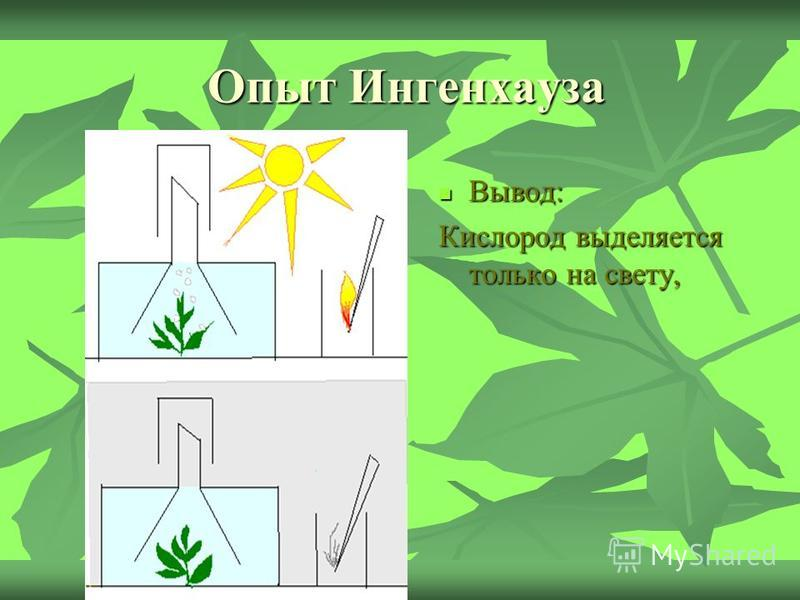 Опыт Ингенхауза Вывод: Вывод: Кислород выделяется только на свету,