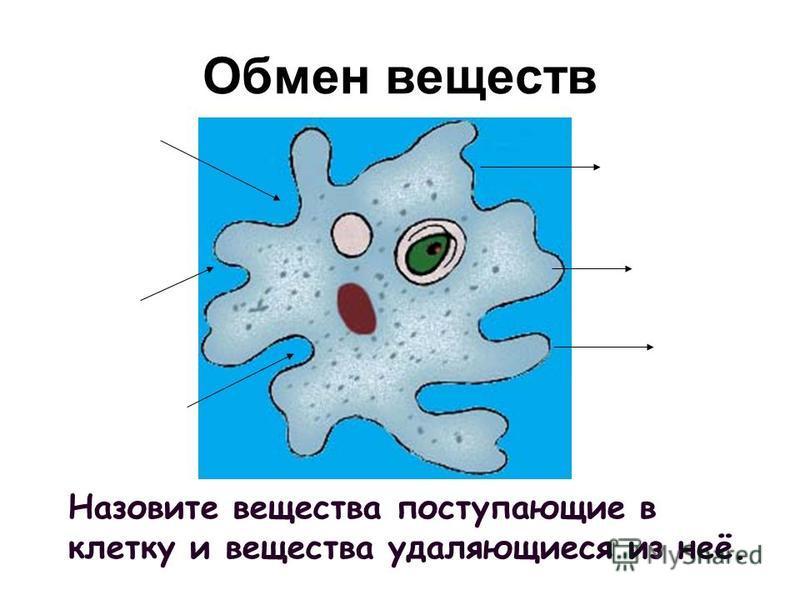 Назовите вещества поступающие в клетку и вещества удаляющиеся из неё. Обмен веществ