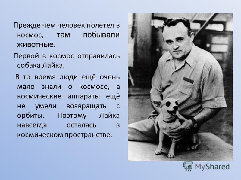 Прежде чем человек полетел в космос, там побывали животные. Первой в космос отправилась собака Лайка. В то время люди ещё очень мало знали о космосе, а космические аппараты ещё не умели возвращать с орбиты. Поэтому Лайка навсегда осталась в космическ