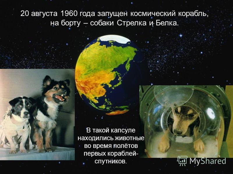 20 августа 1960 года запущен космический корабль, на борту – собаки Стрелка и Белка. В такой капсуле находились животные во время полётов первых кораблей- спутников.