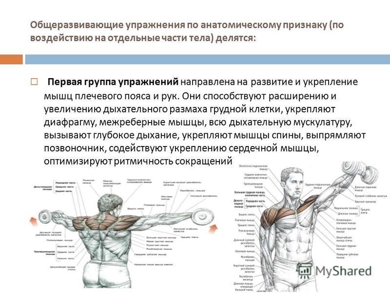 Общеразвивающие упражнения по анатомическому признаку ( по воздействию на отдельные части тела ) делятся : Первая группа упражнений направлена на развитие и укрепление мышц плечевого пояса и рук. Они способствуют расширению и увеличению дыхательного