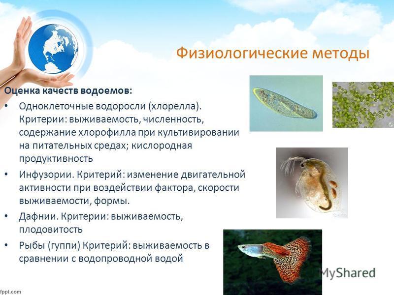 Физиологические методы Оценка качеств водоемов: Одноклеточные водоросли (хлорелла). Критерии: выживаемость, численность, содержание хлорофилла при культивировании на питательных средах; кислородная продуктивность Инфузории. Критерий: изменение двигат