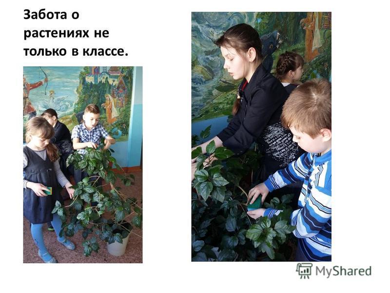Забота о растениях не только в классе.