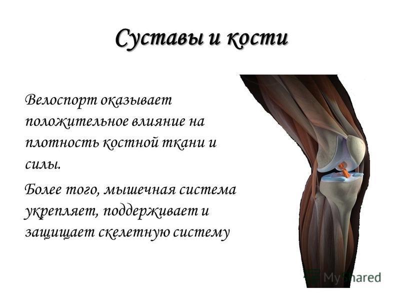 Суставы и кости Велоспорт оказывает положительное влияние на плотность костной ткани и силы. Более того, мышечная система укрепляет, поддерживает и защищает скелетную систему