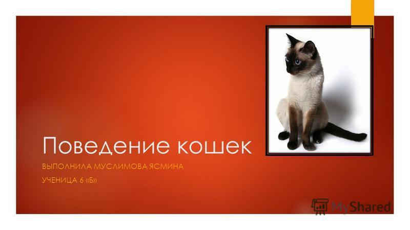 Поведение кошек ВЫПОЛНИЛА МУСЛИМОВА ЯСМИНА УЧЕНИЦА 6 «Б»