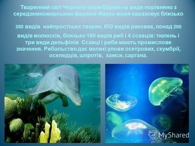 Тваринний світ Чорного моря бідний на види порівняно з середземноморською фауною Фауна моря нараховує близько 350 видів найпростіших тварин, 650 видів ракових, понад 200 видів молюсків, близько 160 видів риб і 4 ссавців : тюлень і три види дельфінів