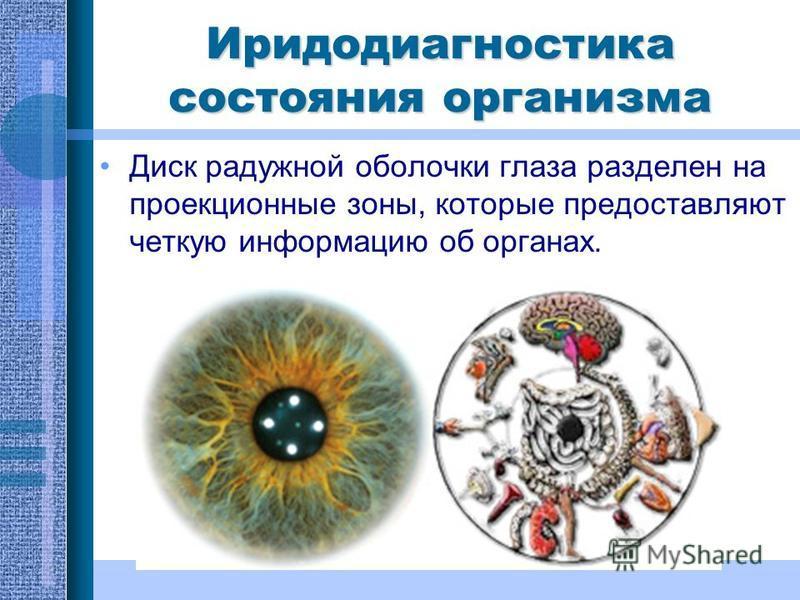 Иридодиагностика состояния организма Диск радужной оболочки глаза разделен на проекционные зоны, которые предоставляют четкую информацию об органах.