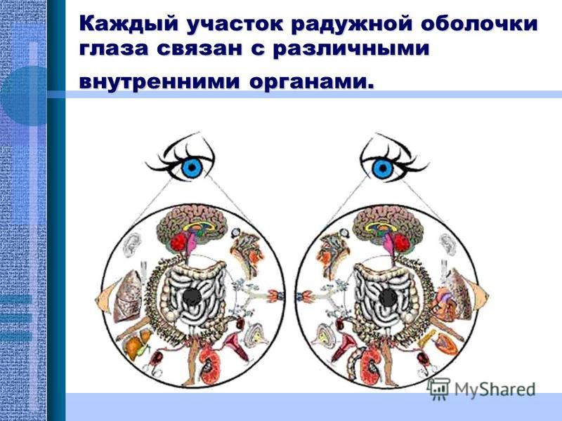 Каждый участок радужной оболочки глаза связан с различными внутренними органами.
