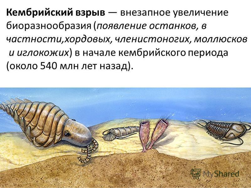 Кембрийский взрыв внезапное увеличение биоразнообразия (появление останков, в частности,хордовых, членистоногих, моллюсков и иглокожих) в начале кембрийского периода (около 540 млн лет назад).
