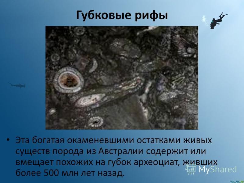 Губковые рифы Эта богатая окаменевшими остатками живых существ порода из Австралии содержит или вмещает похожих на губок археоциат, живших более 500 млн лет назад.