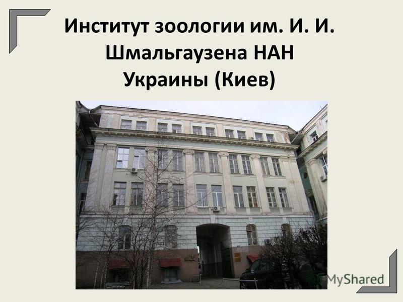 Институт зоологии им. И. И. Шмальгаузена НАН Украины (Киев)