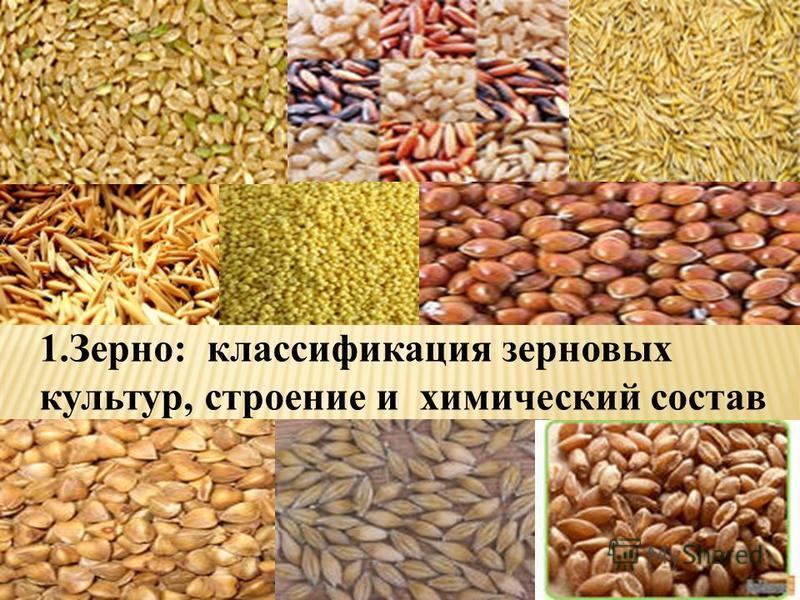 1.Зерно: классификация зерновых культур, строение и химический состав