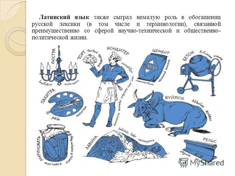 Латинский язык также сыграл немалую роль в обогащении русской лексики (в том числе и терминологии), связанной преимущественно со сферой научно-технической и общественно- политической жизни.