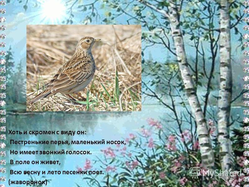 Хоть и скромен с виду он: Пестренькие перья, маленький носок, Но имеет звонкий голосок. В поле он живет, Всю весну и лето песенки поет. (жаворонок)
