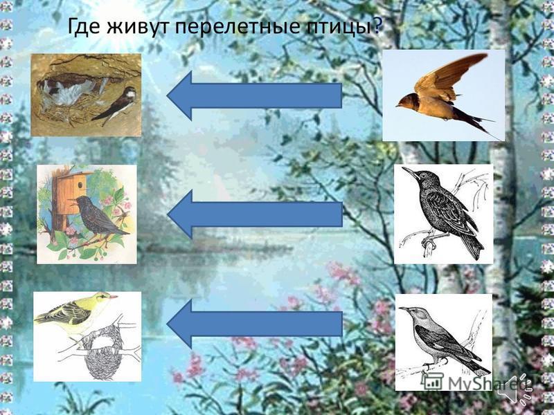 Где живут перелетные птицы?