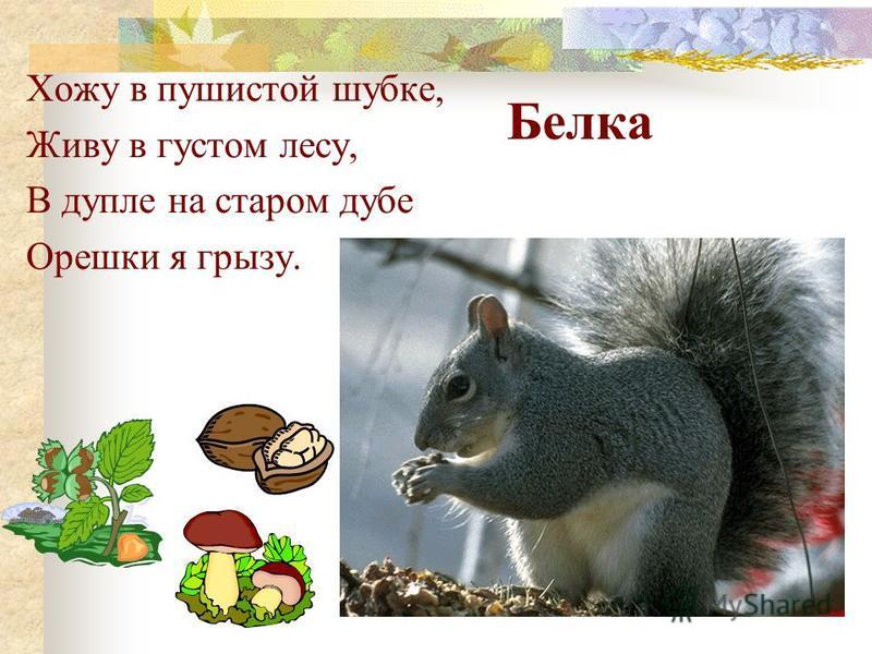КУНИЦА Куница живёт в …. Она питается …. Как она приспособилась к условиям обитания? Значение куницы в природе ….