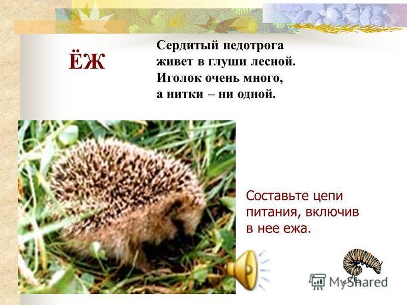 Заяц Меняет цвет шерсти. Дом не строит. Всю зиму не спит.