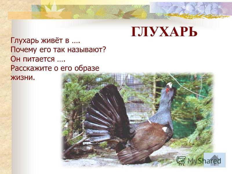 Птицы соловей ястреб