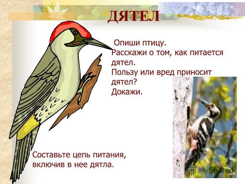 ФИЛИН Опиши птицу. Филин живёт в …. Он питается …. Какой образ жизни ведет? Почему? Значение филина в природе …. Составь цепь питания, включив в нее филина.