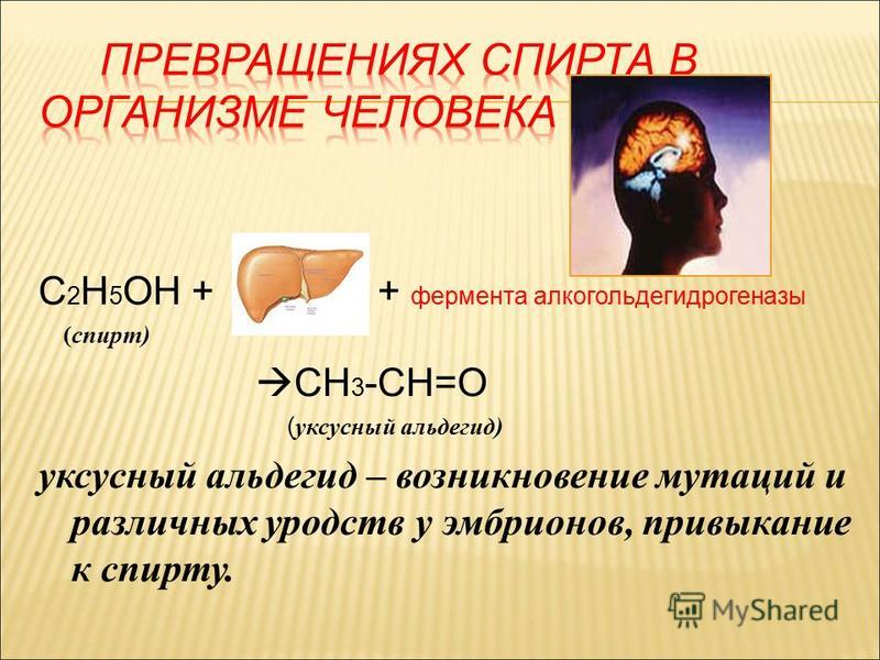 С 2 Н 5 ОН + + фермента алкогольдегидрогеназы (спирт) CH 3 -CH=O ( уксусный альдегид) уксусный альдегид – возникновение мутаций и различных уродств у эмбрионов, привыкание к спирту.
