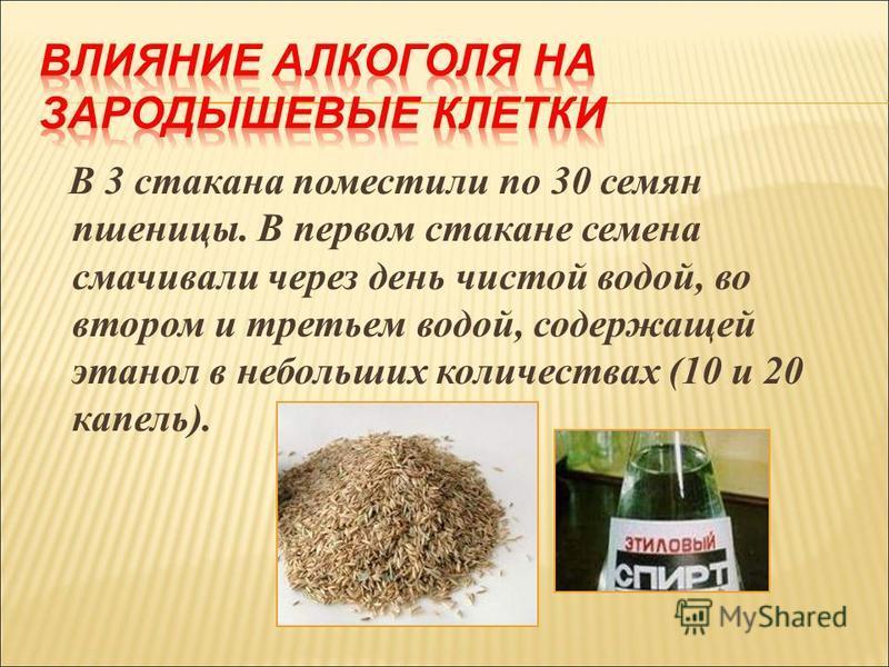 В 3 стакана поместили по 30 семян пшеницы. В первом стакане семена смачивали через день чистой водой, во втором и третьем водой, содержащей этанол в небольших количествах (10 и 20 капель).