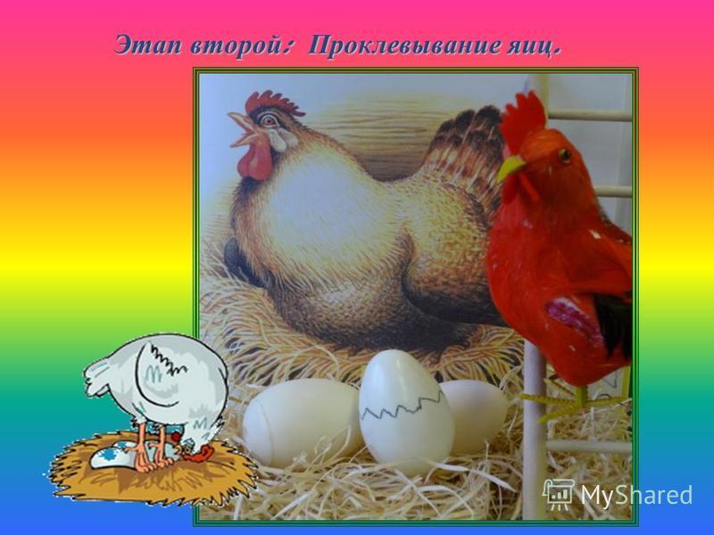 Этап второй : Проклевывание яиц.