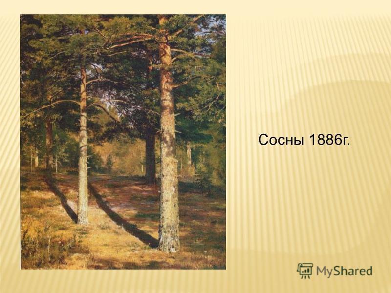 Сосны 1886 г.