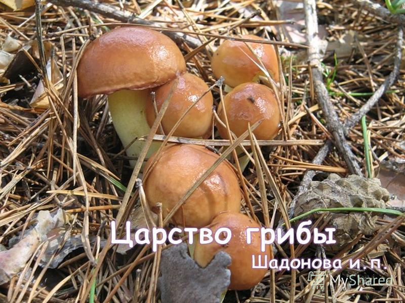 Шадонова и. п Ангарск