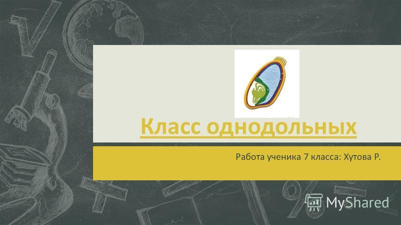 Класс однодольных Работа ученика 7 класса: Хутова Р.