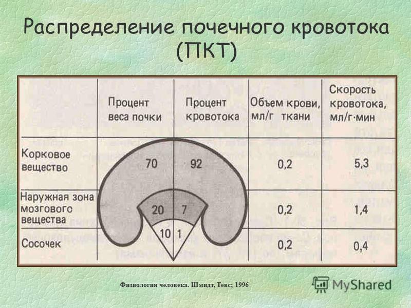 Физиология человека. Шмидт, Тевс; 1996 Распределение почечного кровотока (ПКТ)