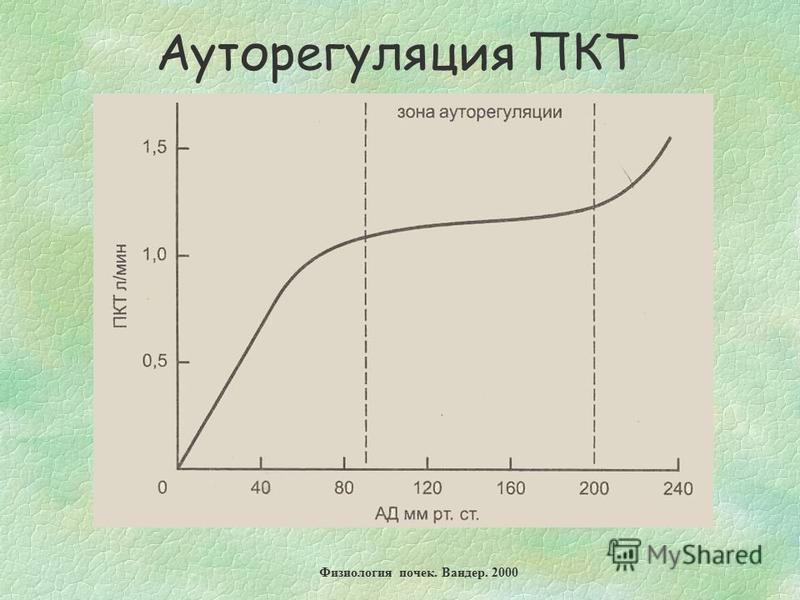 Ауторегуляция ПКТ Физиология почек. Вандер. 2000