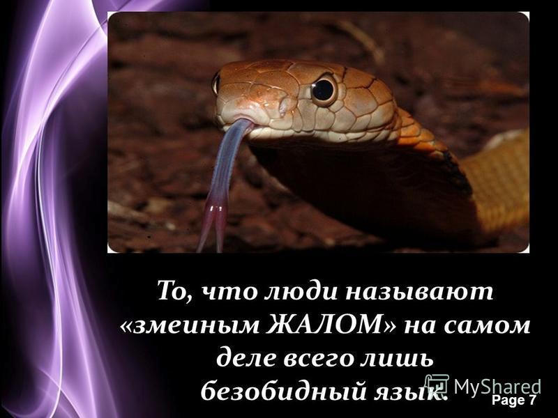 Page 7 То, что люди называют «змеиным ЖАЛОМ» на самом деле всего лишь безобидный язык.