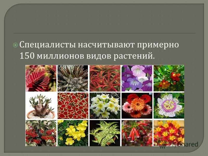Специалисты насчитывают примерно 150 миллионов видов растений.