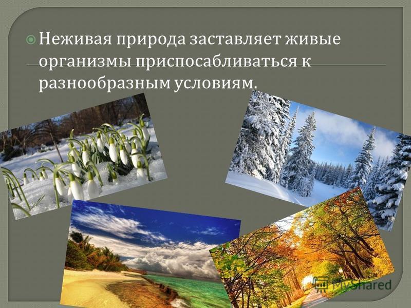 Неживая природа заставляет живые организмы приспосабливаться к разнообразным условиям.