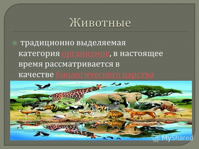 традиционно выделяемая категория организмов, в настоящее время рассматривается в качестве биологического царства организмов биологического царства