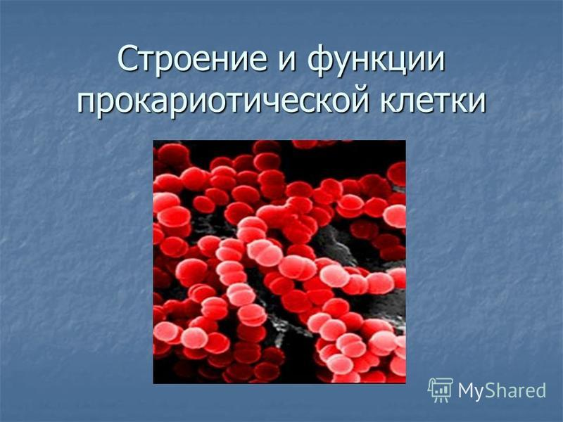 Строение и функции прокариотической клетки