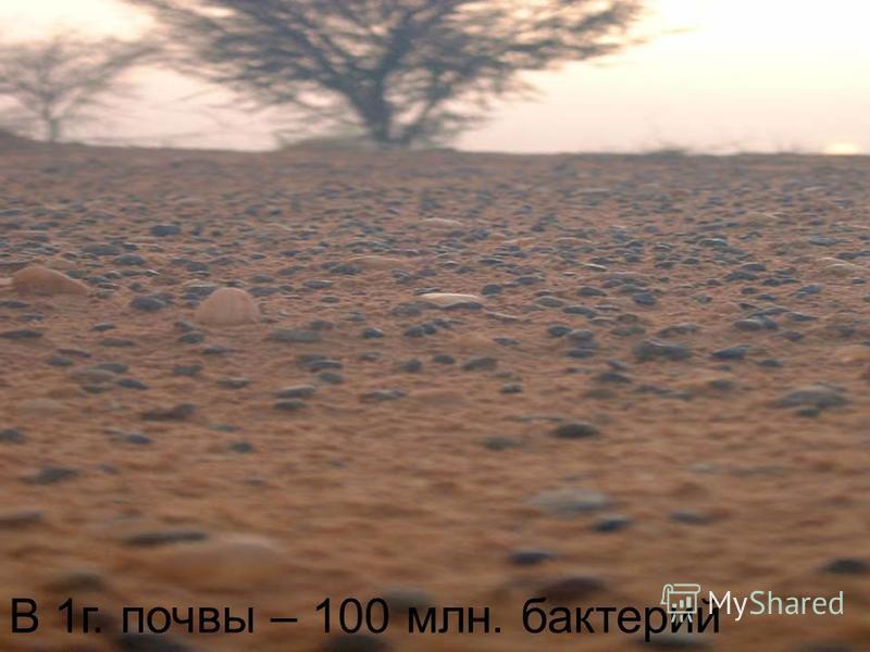 В 1 г. почвы – 100 млн. бактерий