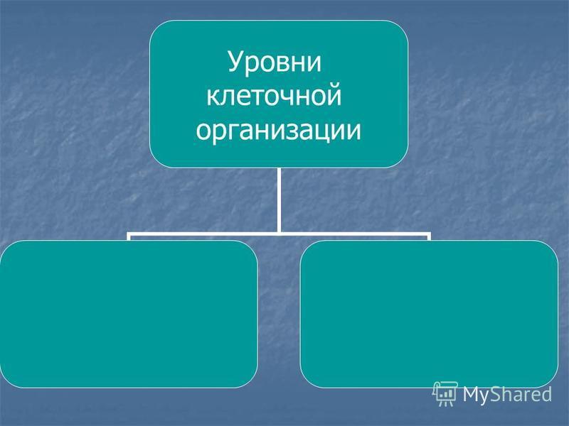 Уровни клеточной организации