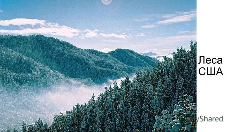 Леса США