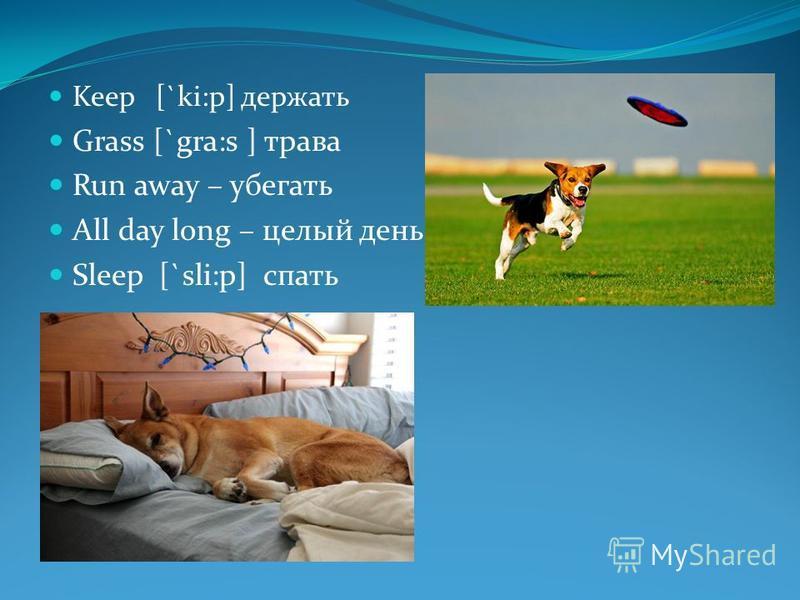 Keep [`ki:p] держать Grass [`gra:s ] трава Run away – убегать All day long – целый день Sleep [`sli:p] спать