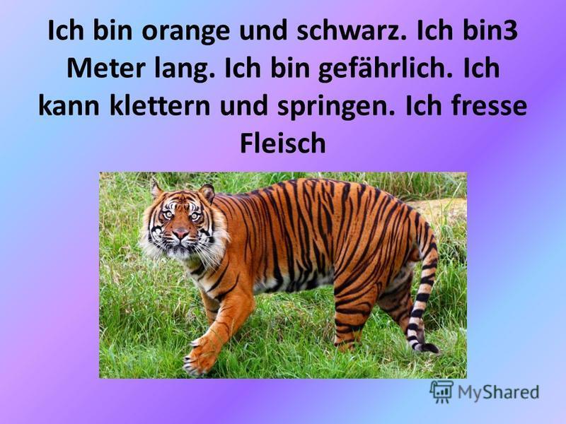 Ich bin orange und schwarz. Ich bin3 Meter lang. Ich bin gefährlich. Ich kann klettern und springen. Ich fresse Fleisch