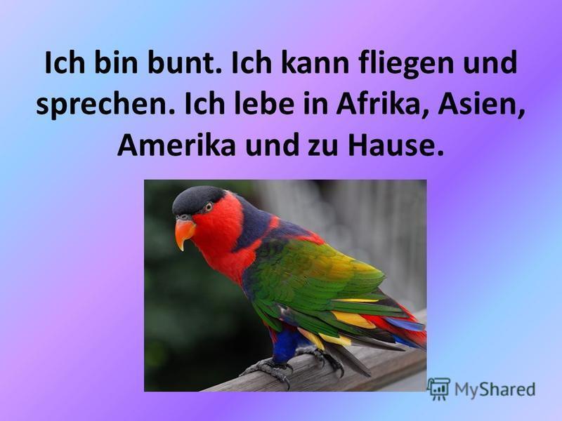 Ich bin bunt. Ich kann fliegen und sprechen. Ich lebe in Afrika, Asien, Amerika und zu Hause.