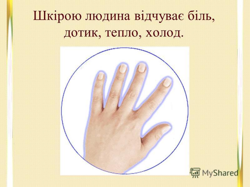 Шкірою людина відчуває біль, дотик, тепло, холод.