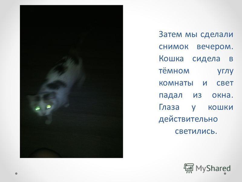 Затем мы сделали снимок вечером. Кошка сидела в тёмном углу комнаты и свет падал из окна. Глаза у кошки действительно светились.