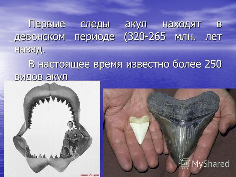 Первые следы акул находят в девонском периоде (320-265 млн. лет назад. В настоящее время известно более 250 видов акул