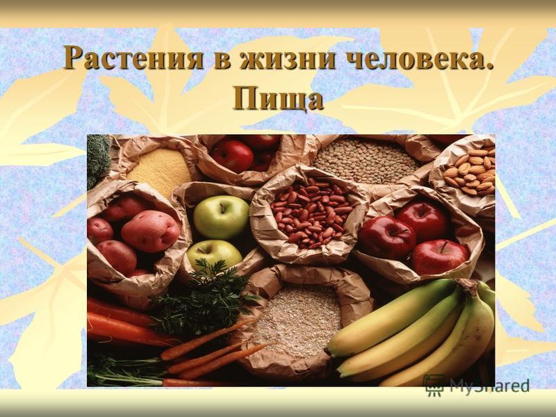 Растения в жизни человека. Пища